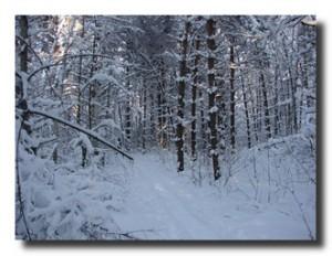 Однажды в лесу мы заблудились, свернув не на ту лыжню