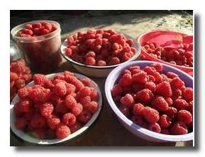 Как вкусна ягода-малина!