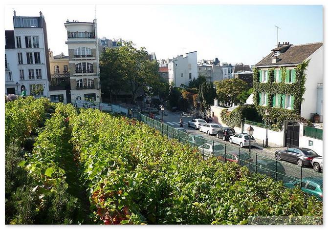 Париж. Монмартр. Виноградники Монмартра