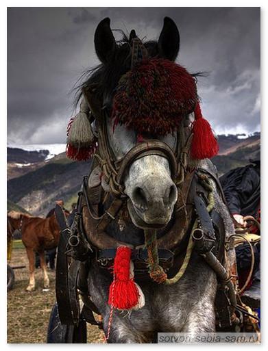 По ту сторону. Лошадь в Тодорову субботу