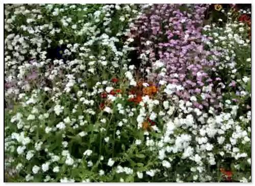 Сад цветов. Париж-12