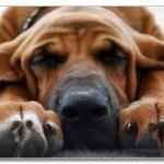 Случай из жизни. Собаки тоже хотят спать