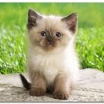 Кошка Сашка