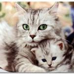 Счастье и хвост кошки