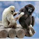 О людях, обезьянах и жизни