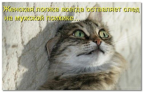 genskaja_logika3